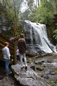 image of a group of people standing, looking at a waterfall. The waterfall is the bottom fall at Lilydale Falls Reserve, Tasmania.