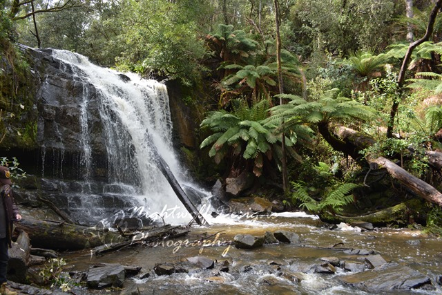 Image of waterfall and surrounding plants. Bottom falls at Lilydale Falls Reserve, Tasmania.