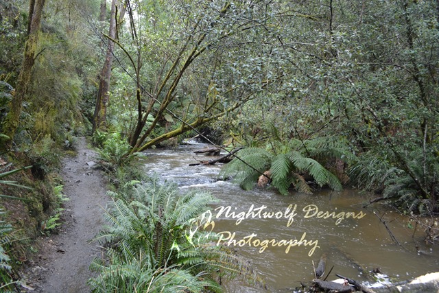 image of a dirt path next to a flowing river. Location Lilydale Falls Reserve, Tasmania