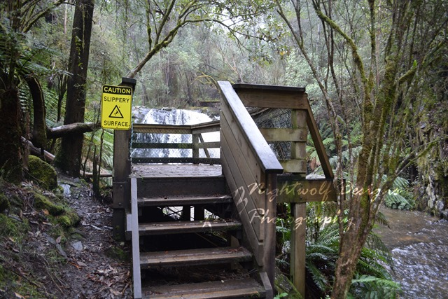 image of wooden viewing platform at the top falls, Lilydale Falls Reserve, Tasmania.